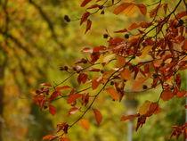 Herbstlaub von maja-310