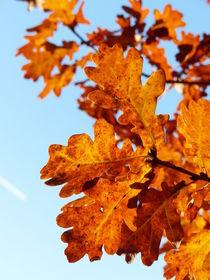 goldener Oktober von maja-310