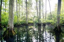The swamp von Maximilian Müller