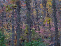 Fall Color v1 by budly