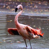 Flamingo Bad von kattobello