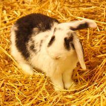 Schwarz weißes Kaninchen Baby im Stroh 5 von kattobello