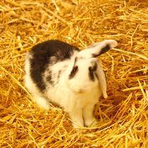 Schwarz weißes Kaninchen Baby im Stroh 4 von kattobello