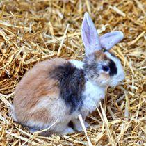 Dreifarbiges Kaninchen Baby im Stroh von kattobello