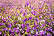 Flax by Jeremy Sage