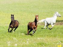 Galoppierende Pferde auf der Wiese by anja-juli
