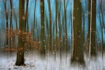WInterwald von Bettina Dittmann