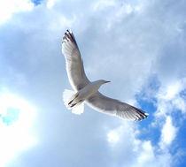 Freiheit. by Zarahzeta ®