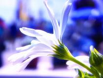 """le blanc"" by Zarahzeta ®"