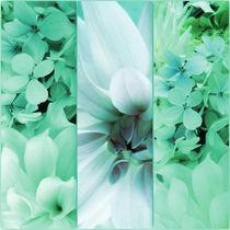 Triptychon zarter Blüten by Renate Grobelny