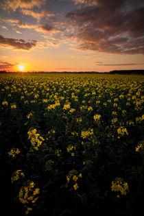 Der Sonnenuntergang by Daniel Nicklich
