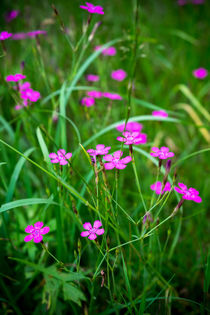 Blumen im Gras by Daniel Nicklich