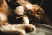 Katze von Daniel Nicklich