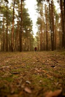 Waldboden by Daniel Nicklich