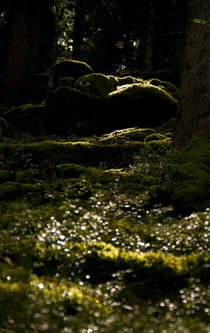 Waldeslicht von ysanne