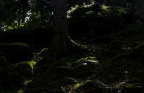 Waldesdunkel by ysanne
