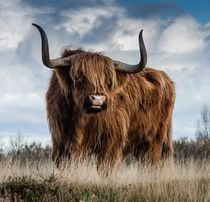 Highland bull in a meadow von past-presence-art