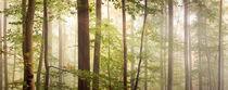Nebelwald by Bettina Dittmann