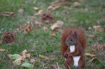 Eichhörnchen mit Haselnuss by bilderharmonie