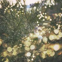 Rainshine by Karen Black