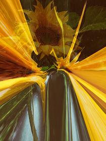 Sonnenblume abstrakt von Chris Berger