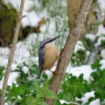 Kleiber im Winter von kattobello