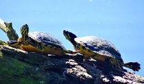 Sonnenbad zu Zweit von kattobello
