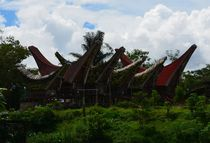Boat shaped roofs of the traditional Tongkonans in Tana Toraja, Sulawesi by firefly