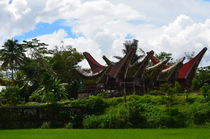 Boat shaped roofs of the traditional Tongkonans in Tana Toraja, Sulawesi von firefly