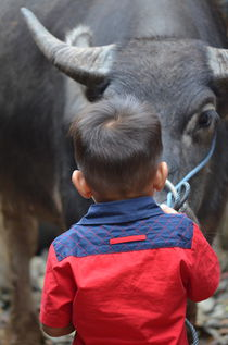 Kid with water buffalo in Tana Toraja, Sulawesi  by firefly