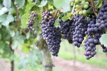 Wein by Rico Petereit
