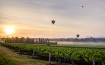 Morning Vines - Hunter Valley Australia von John Lechner