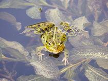 Frosch by maja-310
