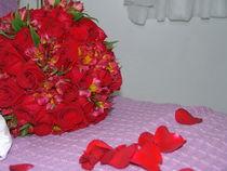 Brazilian Flowers 007 by ALOIZIO NASCIMENTO