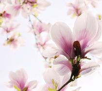 Frühlingserwachen by Renate Grobelny