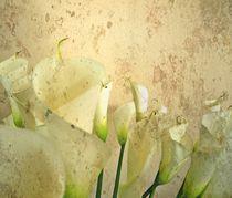 Callas by Renate Grobelny