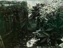 Schatten und Licht von moira