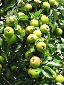 so viele Äpfel am Baum by assy