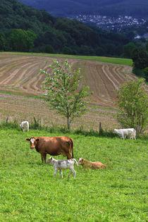 Kühe über dem Tal von Bernhard Kaiser