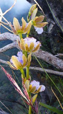 Orquídea  by Fabio Da silva