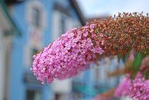 Münchner Jakobsweg: Blumenschmuck in Dießen... von loewenherz-artwork