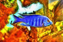 Digital Art Blauer Malawibuntbarsch von kattobello