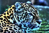 Traum Leopard von kattobello
