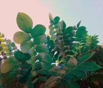 Emerald foliage von Andrei Grigorev
