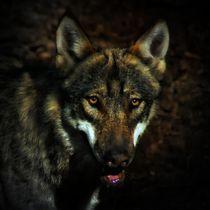 Wolf in der Dunkelheit von kattobello