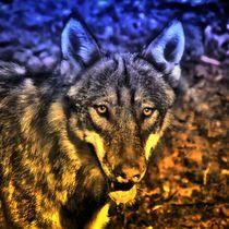 Traumwolf von kattobello