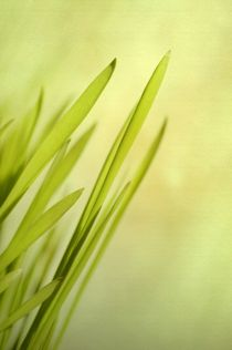Grass by Priska  Wettstein