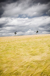 Kornfeld (ohne Bett) VI by Thomas Schaefer