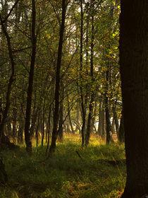 Bäume by Jens Uhlenbusch