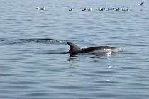 Meeresstille by Gesellschaft zur Rettung der Delphine e.V.